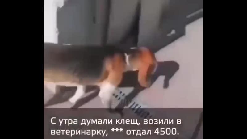 Если бы джоин собакой