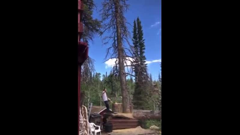 Срубил дерево и занялся акробатикой