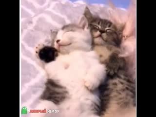 два милашки спят