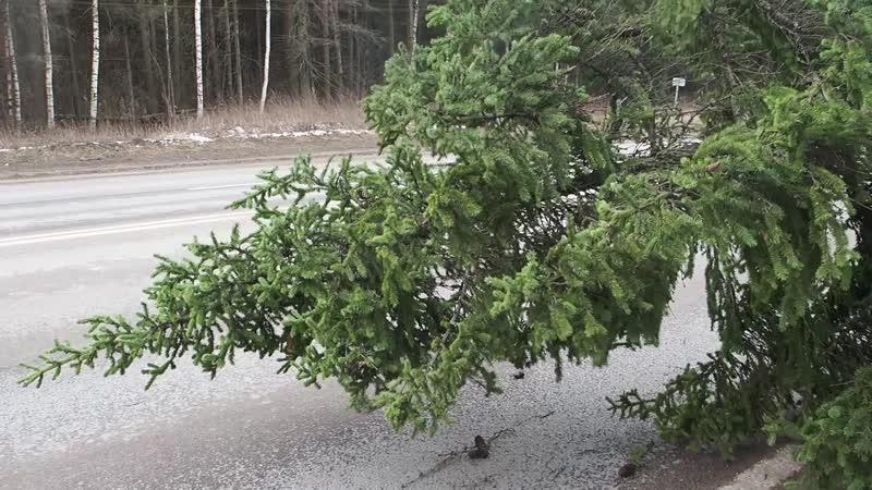 Елка упала на дорогу