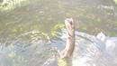 Два часа рыбалки, щуки и голавль приносят радость