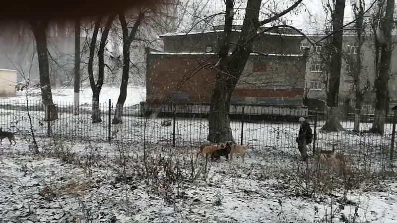 11 января 2020 бродячие собаки рядом со школой во дворе дома