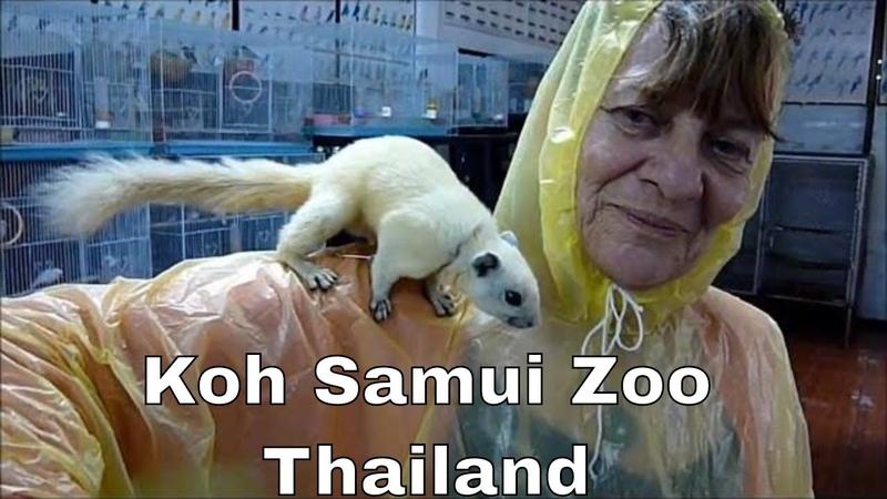 Koh Samui Thailand Zoo TH