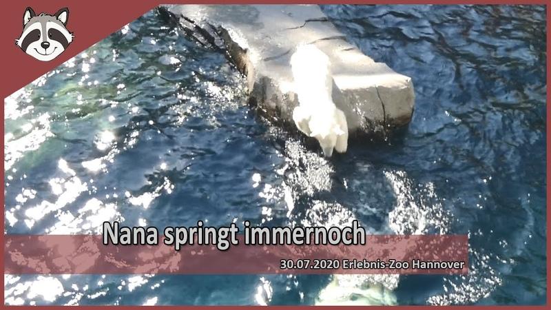 Eisbärchen Nana springt immernoch