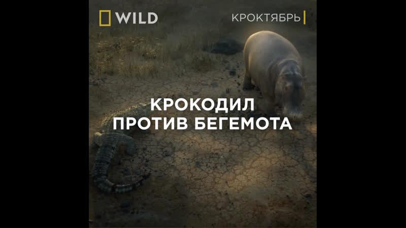 Кроктябрь National Geographic Wild