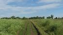 Способ выращивания огурца в открытом грунте