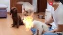 Огонь в видео про собак прикол