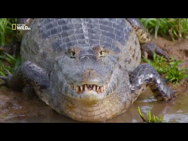 Животные Амазонки.