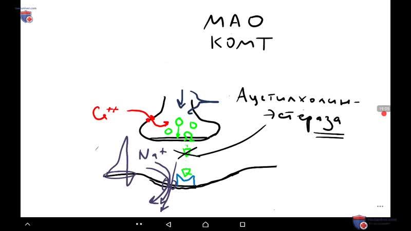 Физиология синапса и нерва профессор д м н П Е Умрюхин