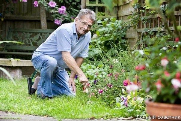 МАЛЕНЬКИЕ, НО ОЧЕНЬ ВАЖНЫЕ СЕКРЕТЫ ОПЫТНОГО САДОВОДА 1. Йод для капусты.В ведро воды добавить 40 капель йода. Когда начнет формироваться кочан, поливать капусту под растение по 1 литру.2.