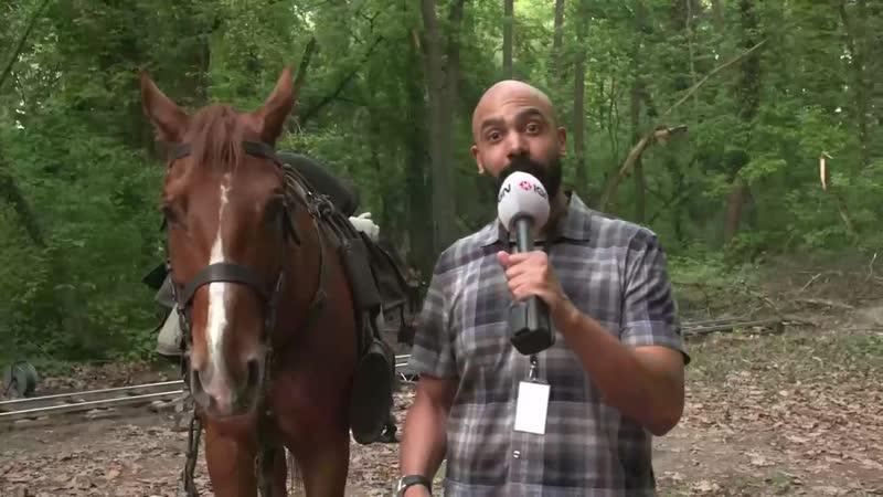 Журналисты IGN побывали на съёмочной площадке сериала Ведьмак и взяли интервью у Плотвы