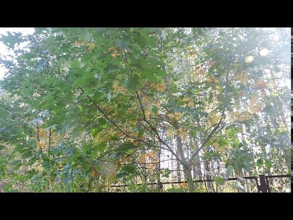 зоовольерный комплекс красные дубы