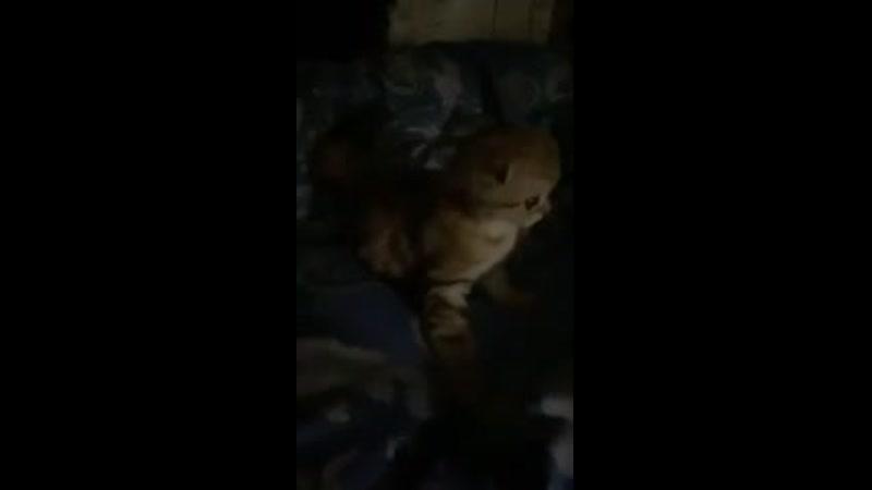 ну как тут заснуть