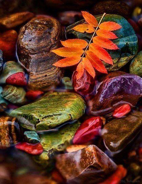 - Что у вас на десерт - Осень. Со вкусом счастья.