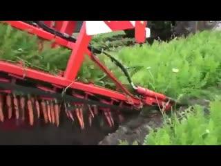 Может кто и видел, но лично я такое вижу впервые - Уборка моркови.