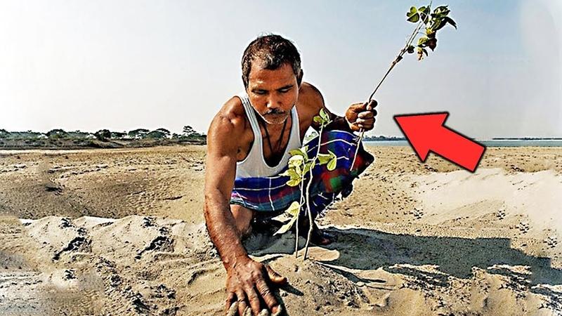 Все люди смеялись над этим человеком когда он сажал деревья в пустыне и были неправы