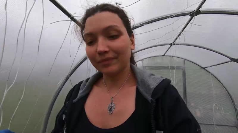VLOG Хозяйку заперли в теплице на полдня! The mistress was locked in the greenhouse for half a day