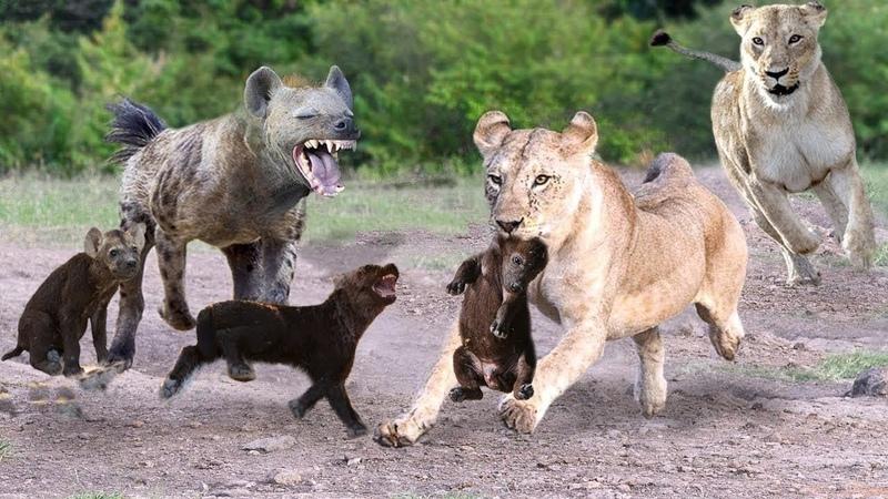 Sư tử dùng thần nhãn phát hiện có điều nghi vấn dưới Lỗ Thì ra là vậy Sự bất cẩn Linh Cẩu
