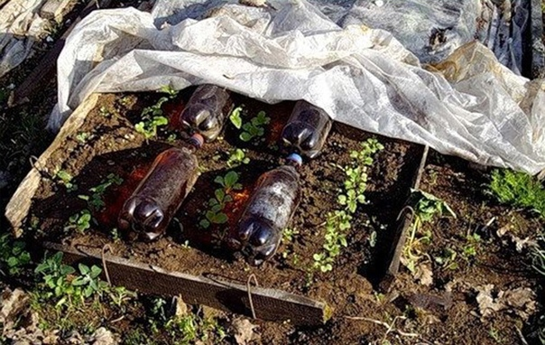 ПРИМЕНЕНИЕ ПЛАСТИКОВЫХ БУТЫЛОК В ПОМОЩЬ РАССАДЕ Пластиковые бутылки темного цвета с водой аккумулируют тепло,за счет того,что днем вода в них нагревается и ночью отдают его
