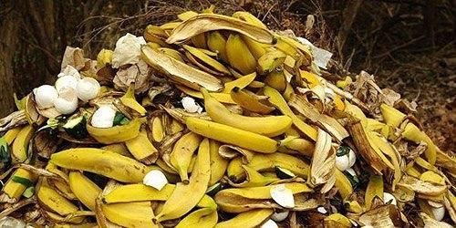 Удобрение из банановых шкурок: 15 необычных способов их применения в огороде Банановые шкурки способны творить чудеса в наших садах и огородах. Высушенные, смолотые в порошок, свежие или