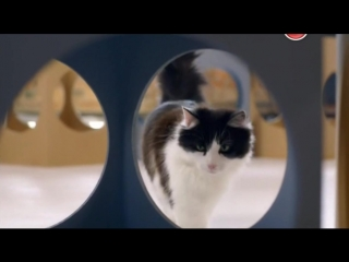 BBC. Кошачьи тайны / Cat Watch 2014: The New Horizon Experiment, 3 серия из 3