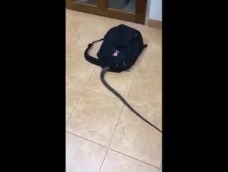 Змея заползла в рюкзак / смешное видео /приколы