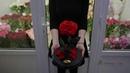 Как выглядит красная роза в колбе - купить в Минске с доставкой
