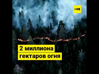 2 миллиона гектаров огня: лесные пожары в Сибири и на Дальнем Востоке