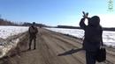Незаконная вырубка леса в Якутии