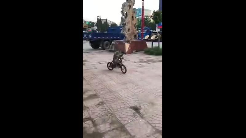 Обезьяна и велосипед