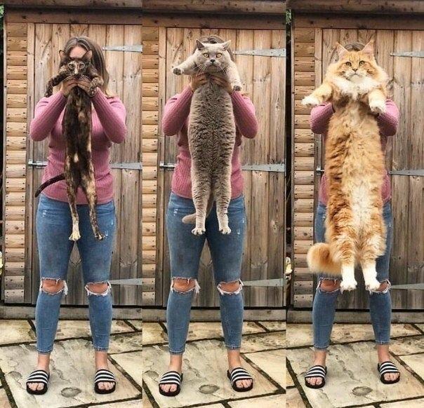 купила кота побольше, чтобы выглядеть стройной