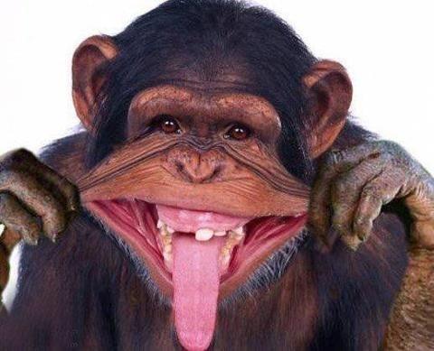 Почему не все обезьяны стали людьми Они этого не сделали по той же причине, по которой не все рыбы вышли на сушу и стали четвероногими, не все одноклеточные стали многоклеточными, не все