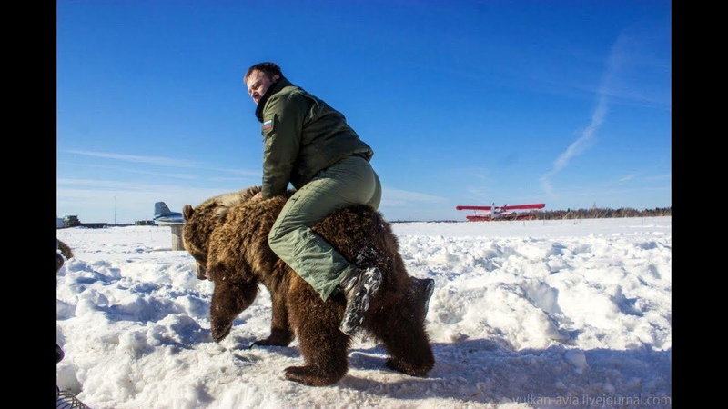 Подсел на медведя (предполетная подготовка)