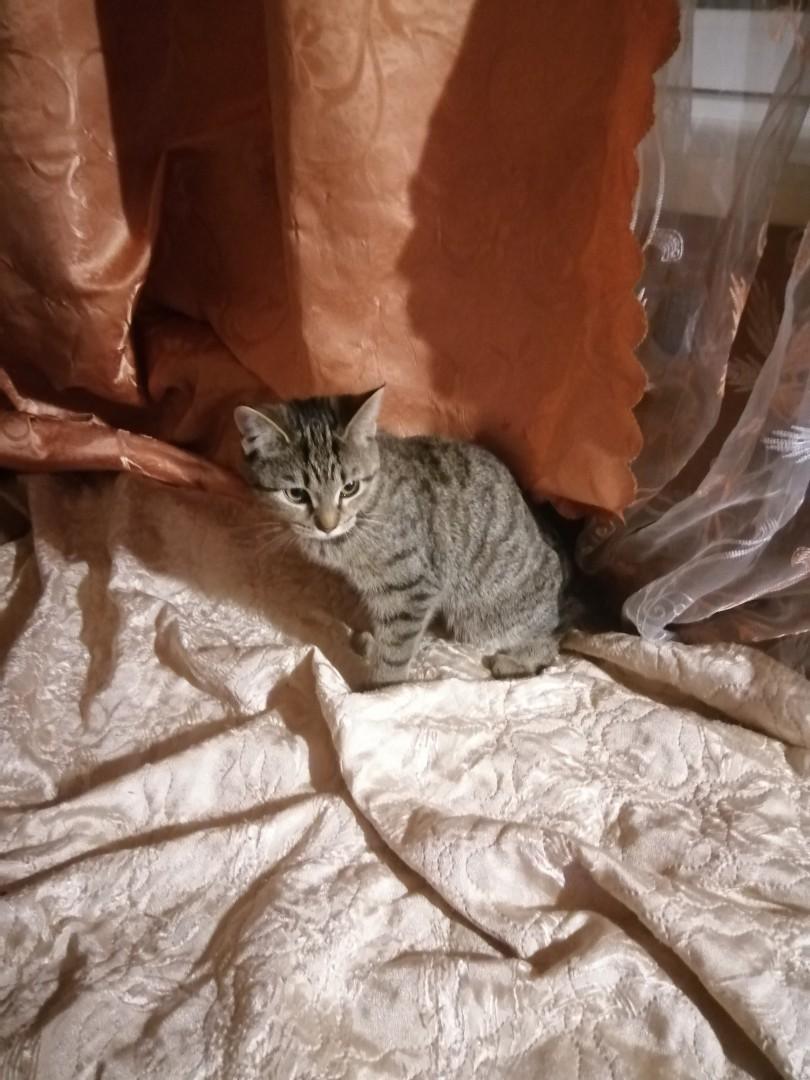 На Пушкина 97 прибился котёнок. К лотку