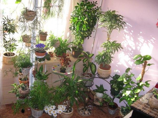 10 комнатных растений, которым нужен минимальный уход.