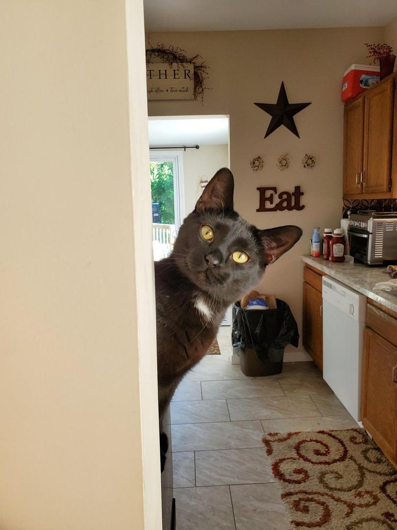 "Кто-то сказал ""еда""?"