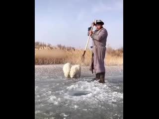 Обычный день в Монголии