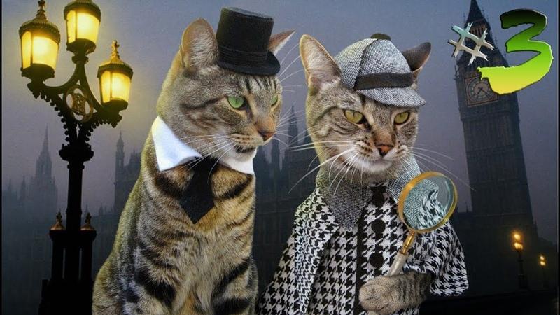 ПРИКОЛЫ С КОТАМИ ДО СЛЕЗ- Смешные Коты и Кошки 2019 Выпуск 3