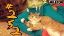 КОТЫ 2019 Приколы с котами с озвучкой Смешные Кошки Funny Cats Выпуск 252