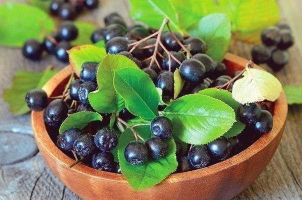 ЦЕЛЕБНАЯ ЧЕРНОПЛОДКА .ЧТО НАДО ЗНАТЬ О ЯГОДЕ-ТАБЛЕТКЕ. Чего уж только нет в этой замечательной ягоде! Её состав просто переполняют вещества, полезные для нашего организма. После её