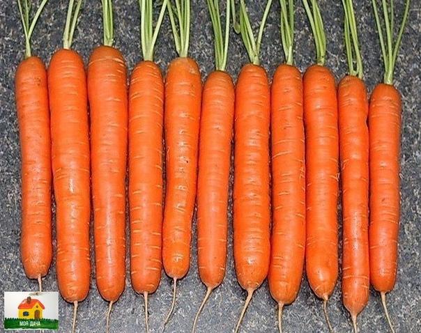 Я морковь сею вот как.....