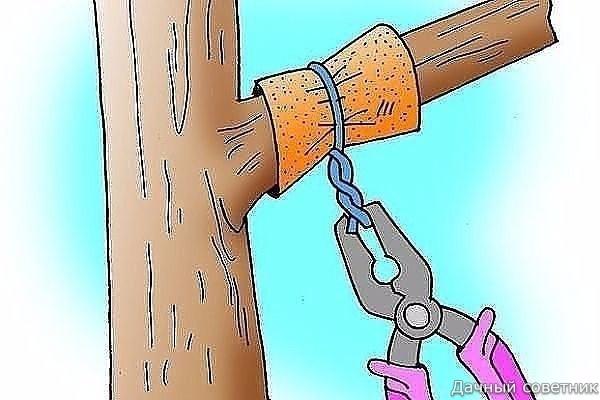 Способы заставить плодоносить деревья