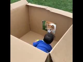 Как играть с песиком на карантине