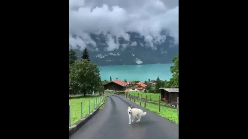 Lake Brienz in Switzerland This place is so beautiful اچھے الفاظ