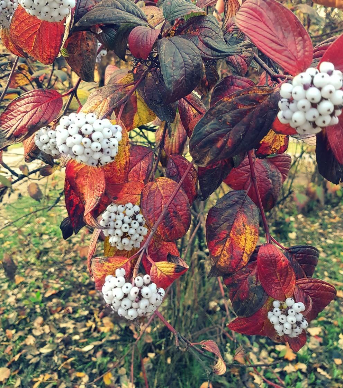Осень балует последними красками. Наслаждайтесь! Совсем скоро