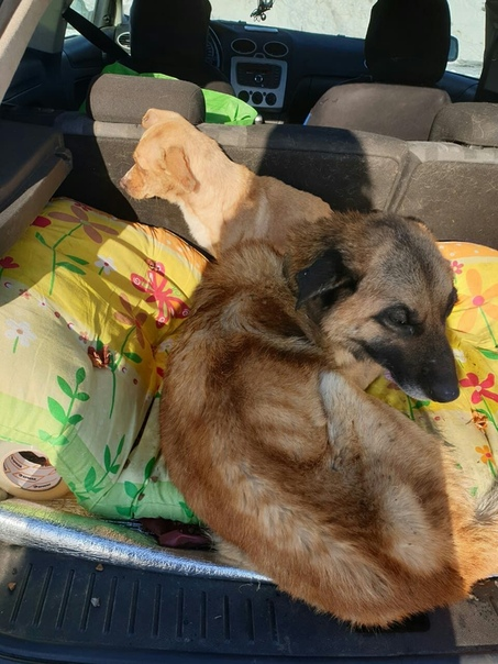 Уральские зоозащитники заявили, что предприниматель из Камышлова, который отлавливает бродячих собак в этом и ближайших городах, доводит животных до полусмерти Передержка находится в Камышлове.