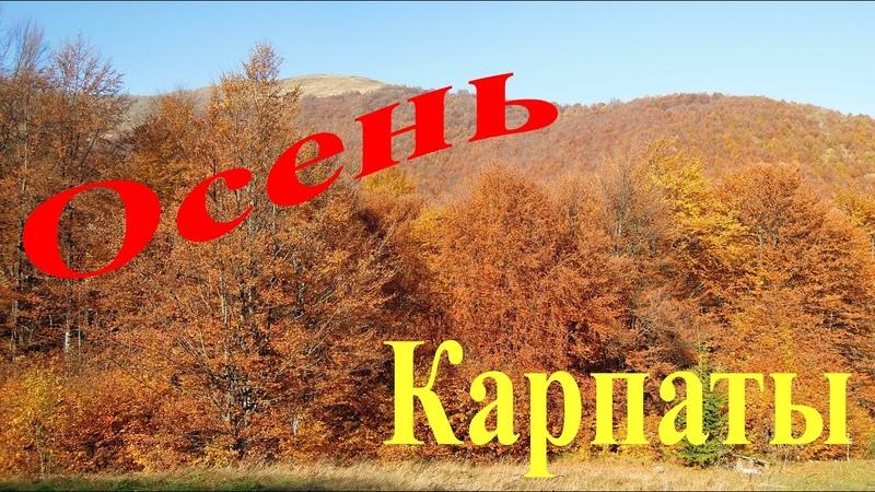Осень в Карпатах. Бабье лето в горах.