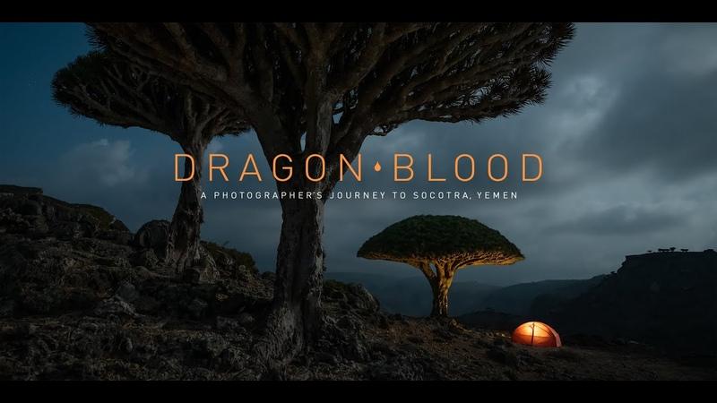 Dragon Blood A Photographer's Journey to Socotra Yemen