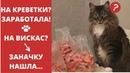 Приколы с Котами. Подборка Видео про Кошек, которые Любят Деньги. Смешные Кошки и Коты