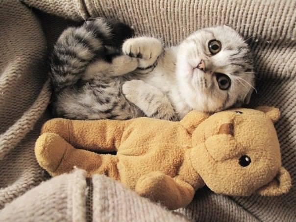 чехии картинки котиков и мишек бройлеры болеют чаще